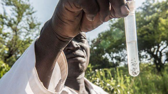 Un uomo sta mostrando una provetta con delle mosche nere dentro